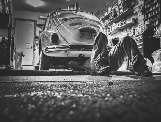 Der Parkettkäfer – Der Undercover-Schädling