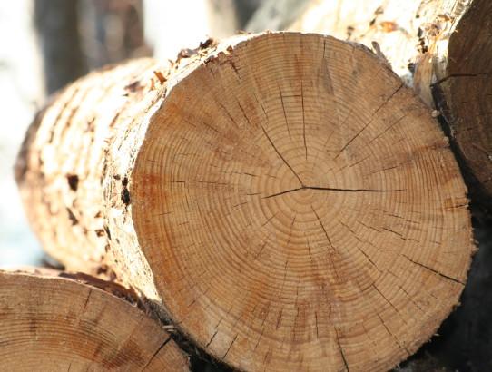 Holzböden in außergewöhnlicher Optik – Hirnholz-Parkett