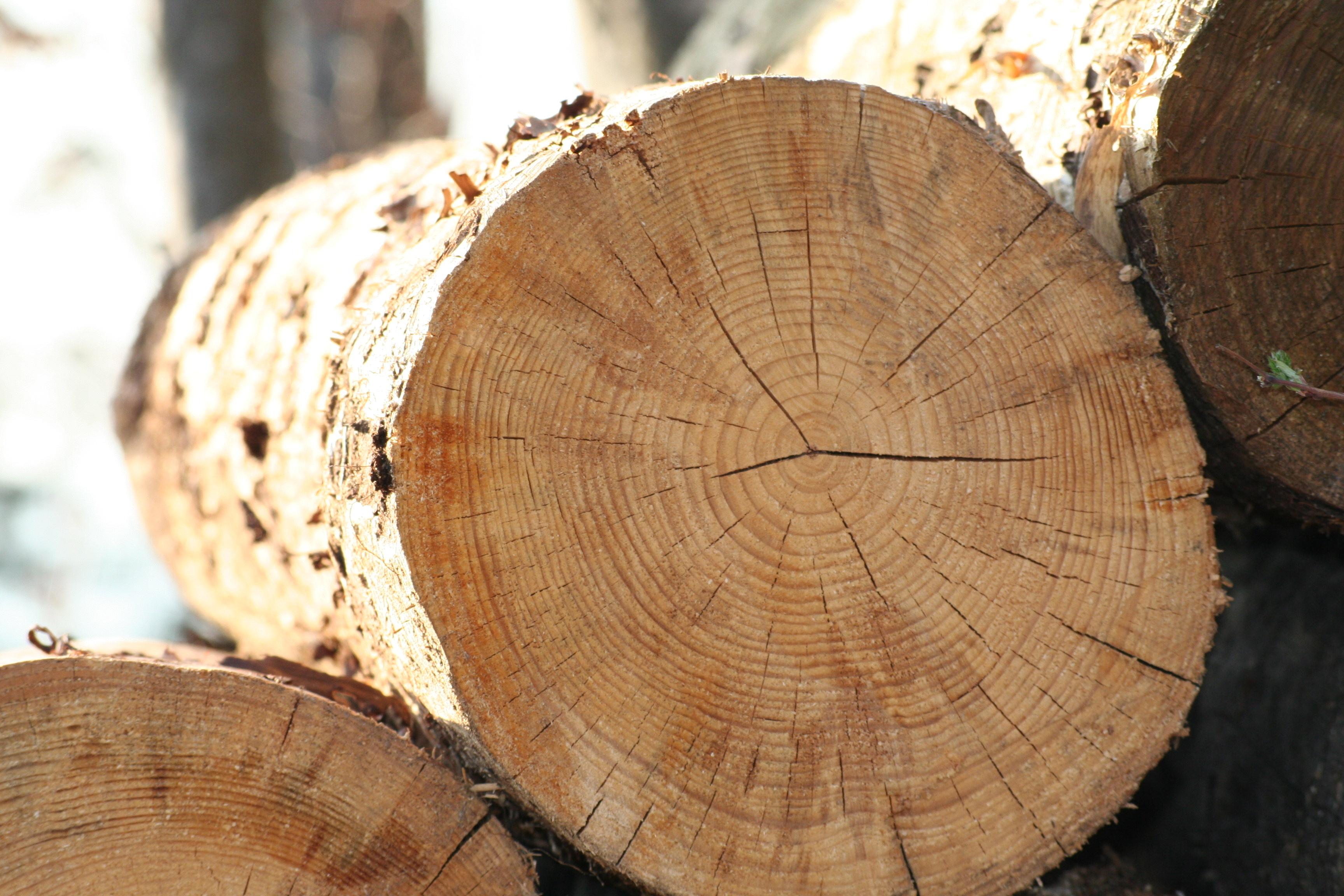 Holzfußboden Optik ~ Hirnholz parkett quer geschnitten u203a parkett bericht.de